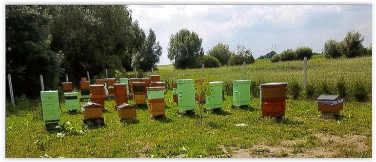 pszczoł (6)